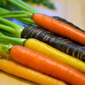 Multi-colored Organic Carrots for Photo Blogs